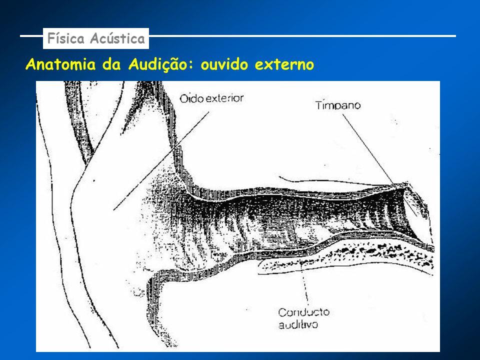 Anatomia da Audição: ouvido externo