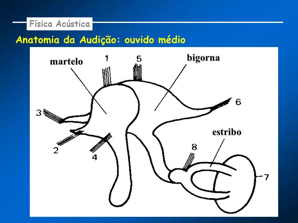 Anatomia da Audição: ouvido médio