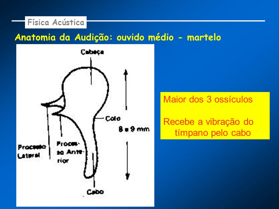 Anatomia da Audição: ouvido médio - martelo