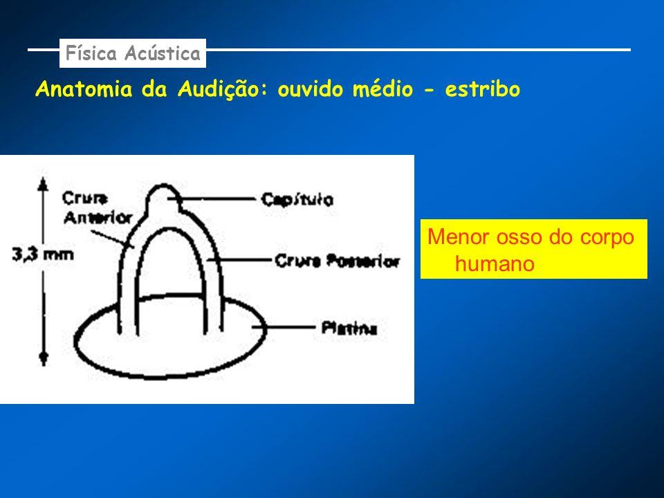 Anatomia da Audição: ouvido médio - estribo