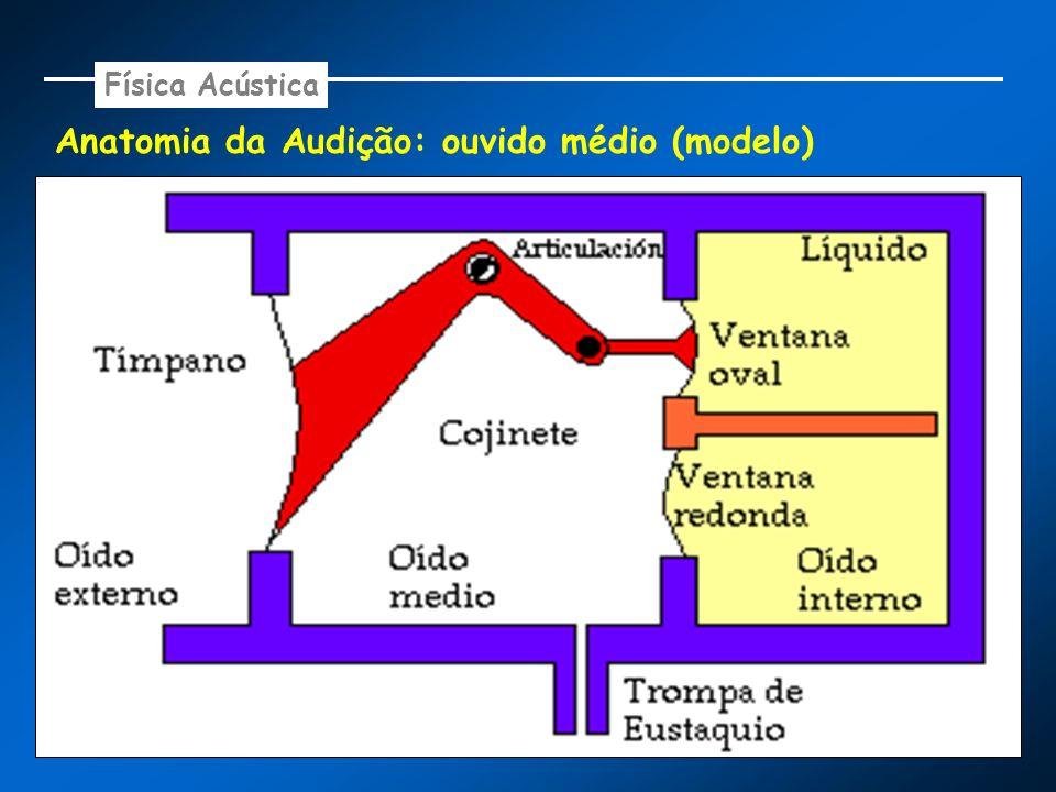 Anatomia da Audição: ouvido médio (modelo)