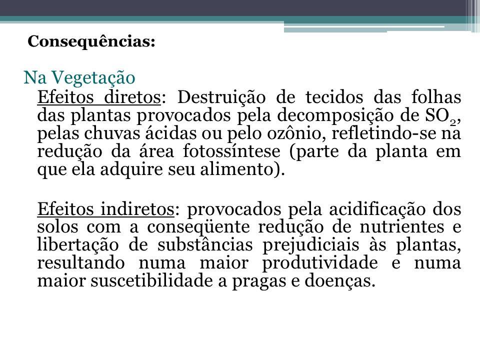 Consequências: Na Vegetação.