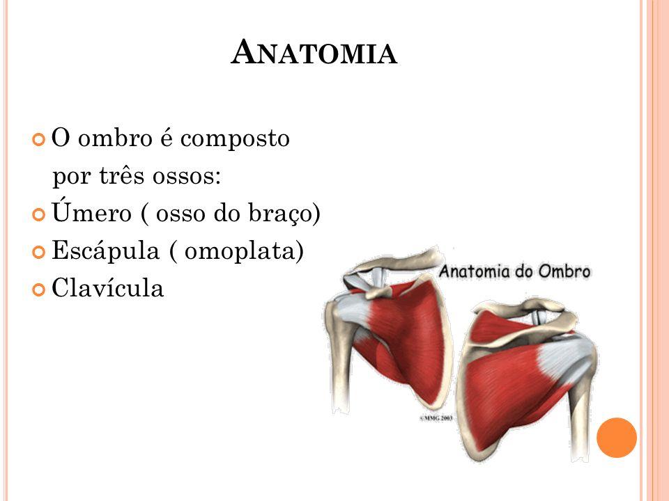Anatomia O ombro é composto por três ossos: Úmero ( osso do braço)