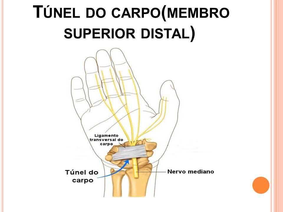 Túnel do carpo(membro superior distal)