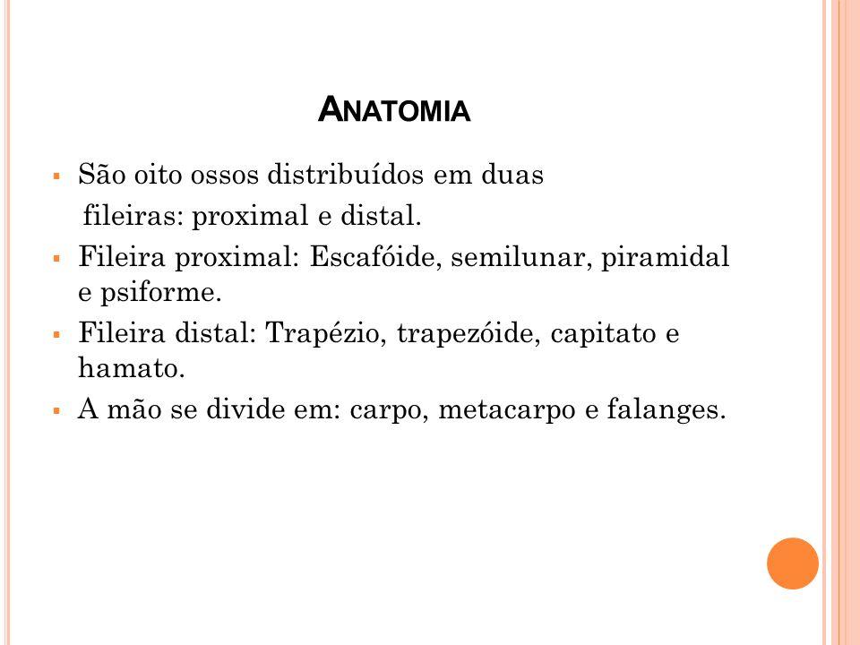 Anatomia São oito ossos distribuídos em duas