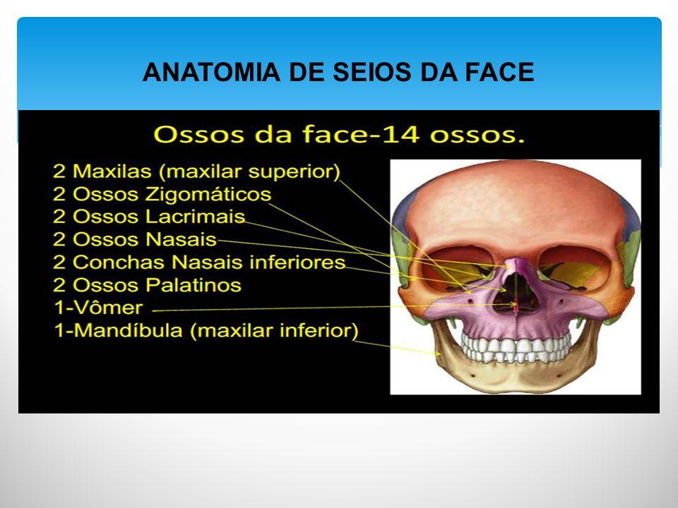 ANATOMIA DE SEIOS DA FACE