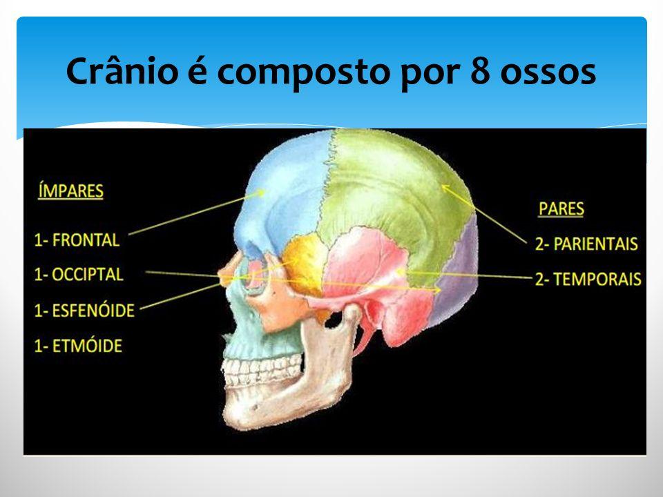 Crânio é composto por 8 ossos
