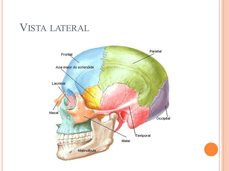 Vista lateral