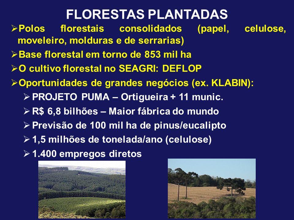 FLORESTAS PLANTADAS Polos florestais consolidados (papel, celulose, moveleiro, molduras e de serrarias)