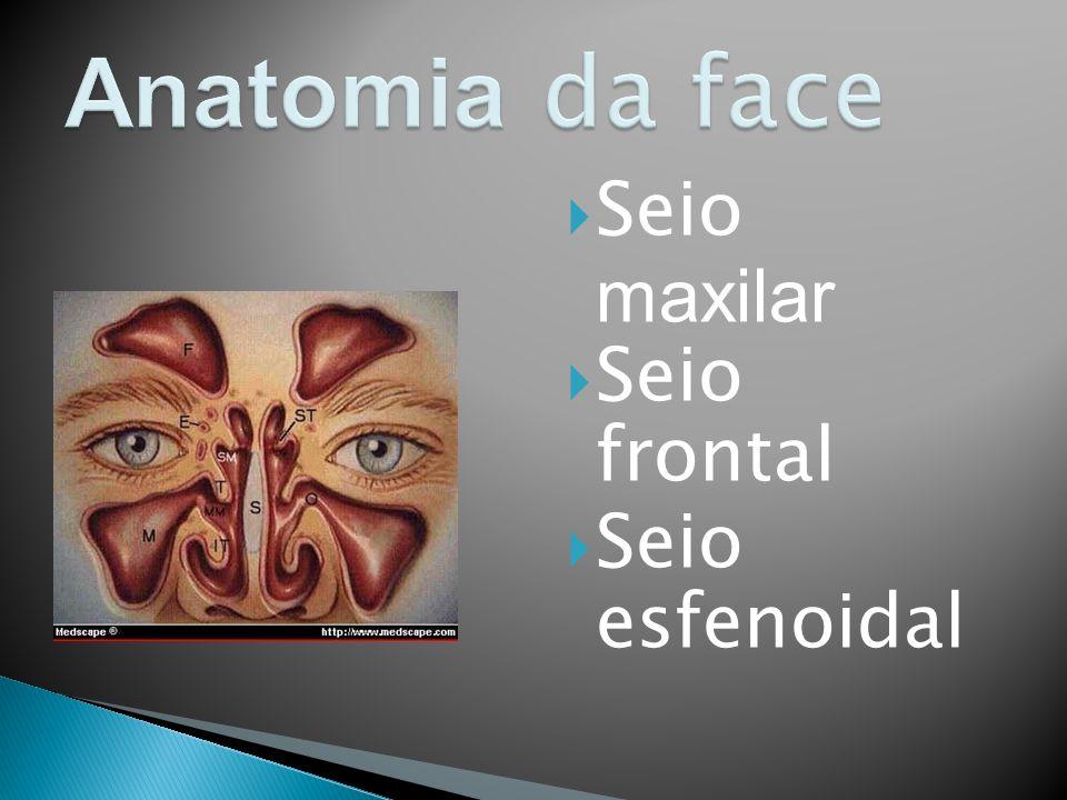 Anatomia da face Seio maxilar Seio frontal Seio esfenoidal