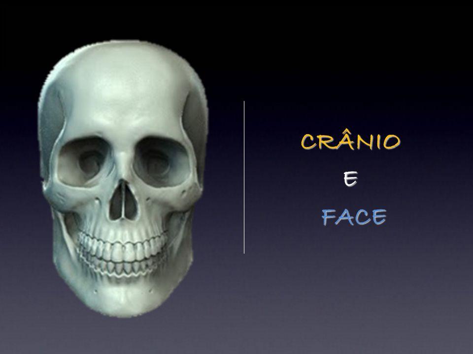 CRÂNIO E FACE