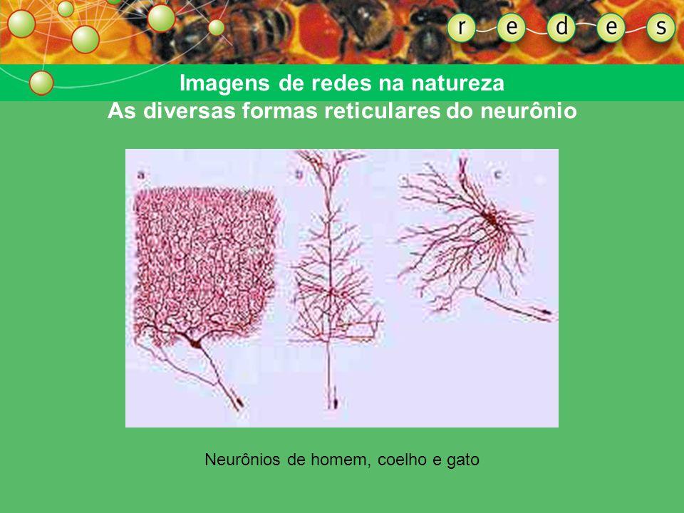 Imagens de redes na natureza