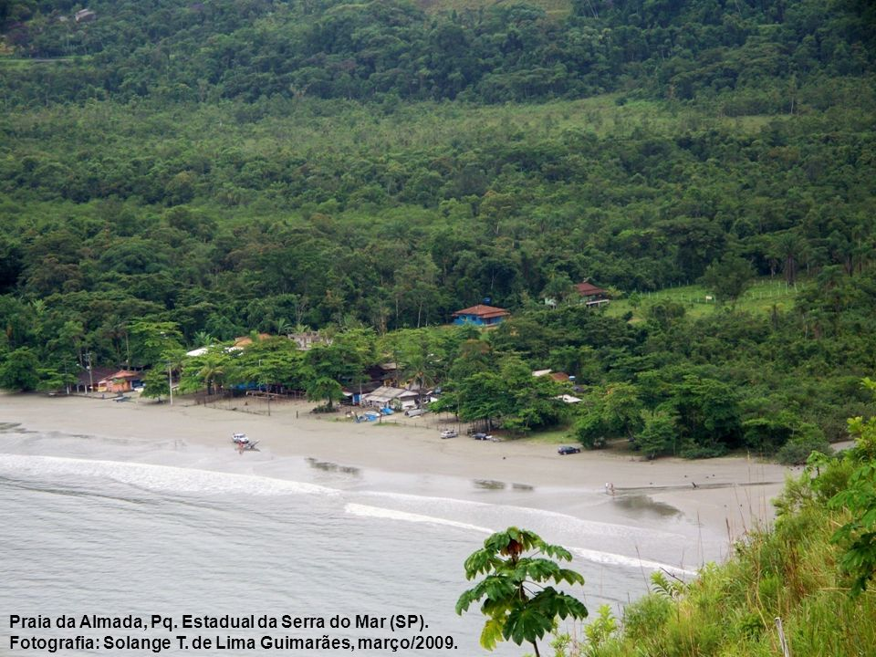 Praia da Almada, Pq. Estadual da Serra do Mar (SP).