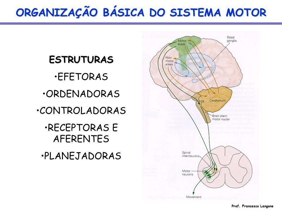 ORGANIZAÇÃO BÁSICA DO SISTEMA MOTOR Prof. Francesco Langone
