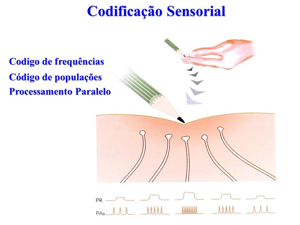 Codificação Sensorial