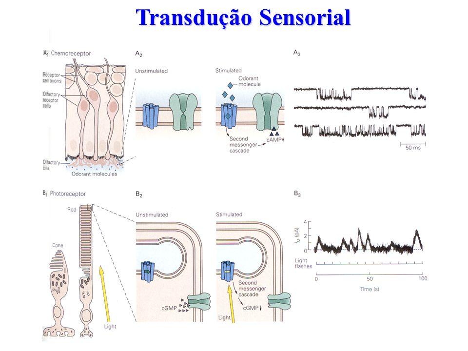 Transdução Sensorial