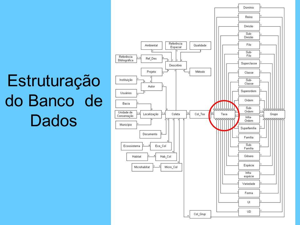 Estruturação do Banco de Dados