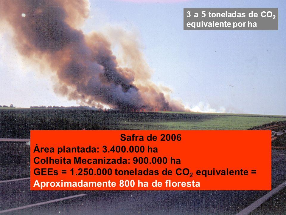 Colheita Mecanizada: 900.000 ha