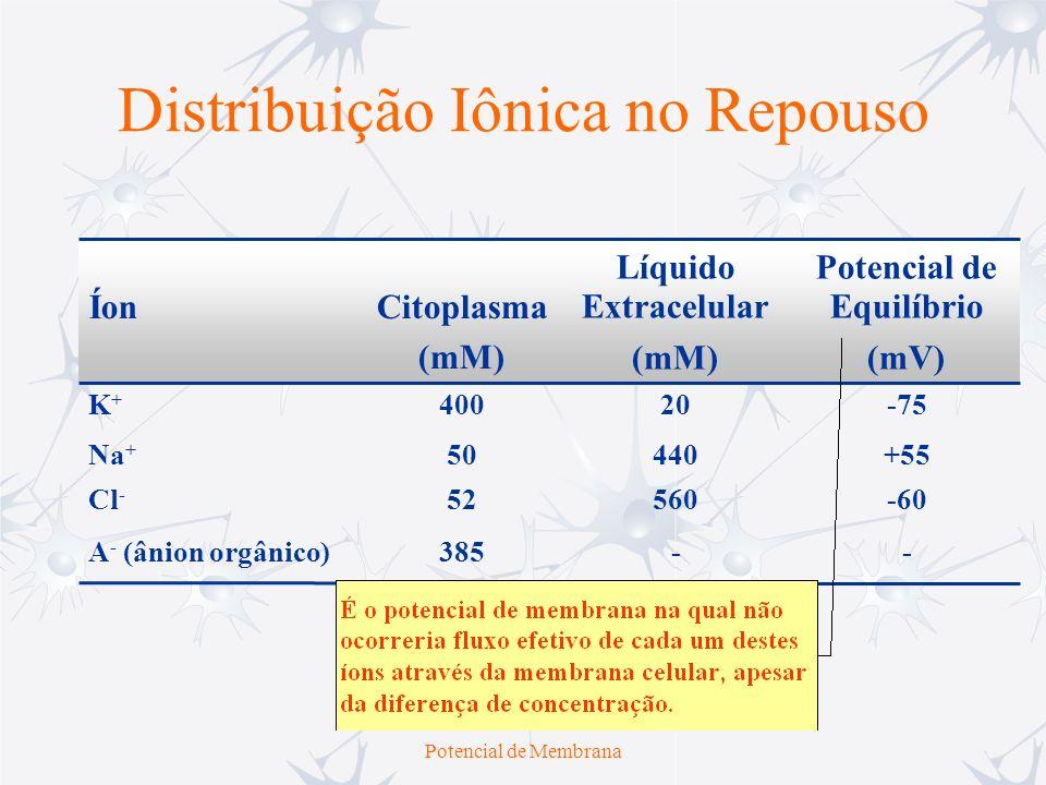 Distribuição Iônica no Repouso
