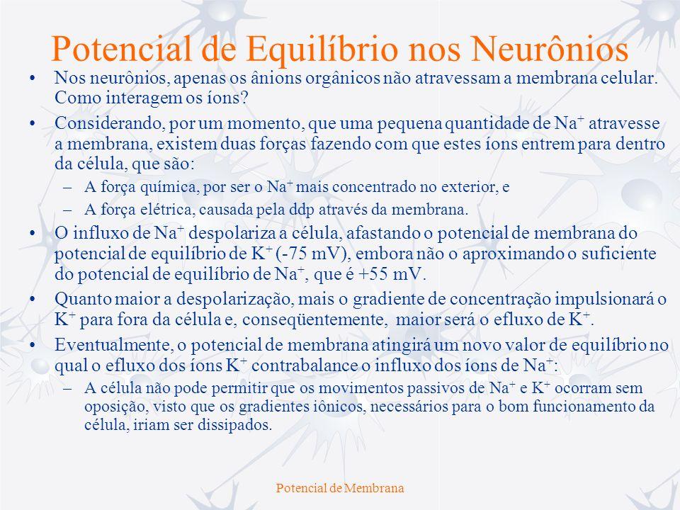 Potencial de Equilíbrio nos Neurônios
