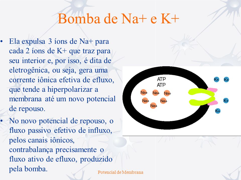 Bomba de Na+ e K+