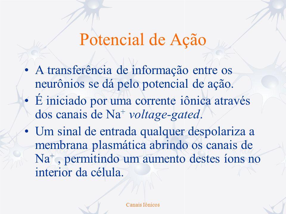 Potencial de Ação A transferência de informação entre os neurônios se dá pelo potencial de ação.