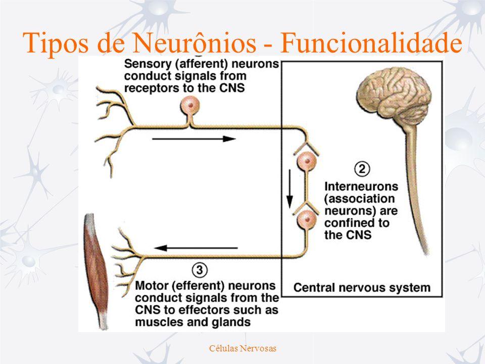 Tipos de Neurônios - Funcionalidade