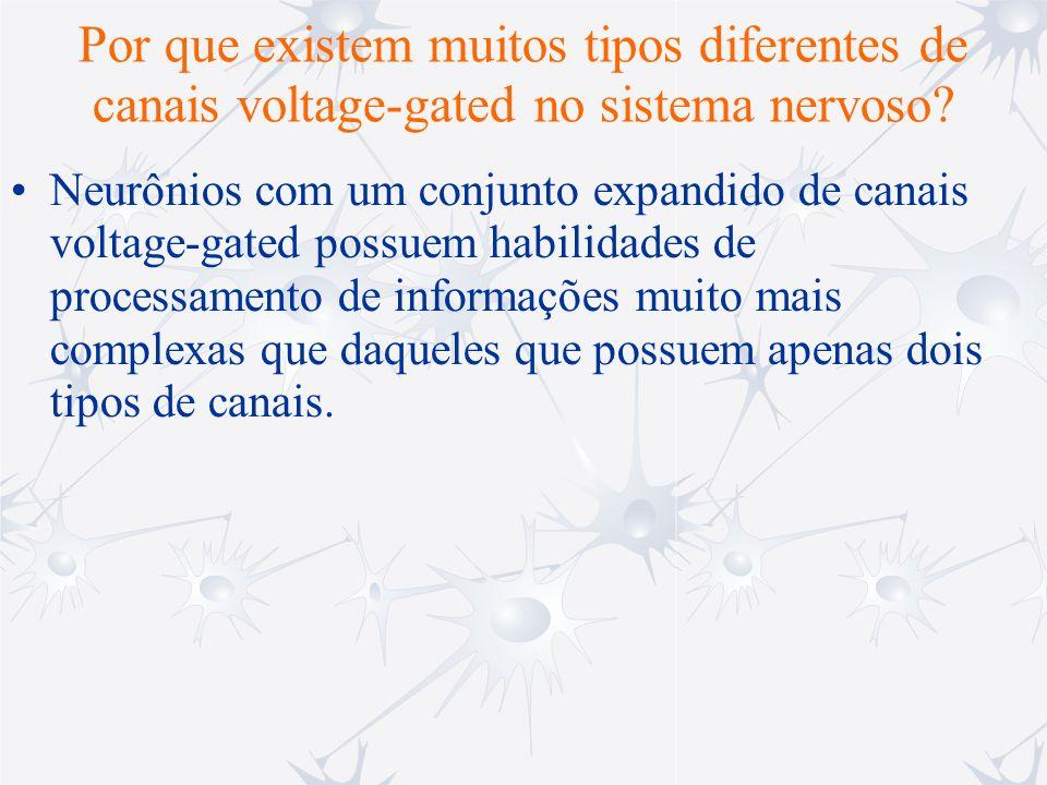 Por que existem muitos tipos diferentes de canais voltage-gated no sistema nervoso