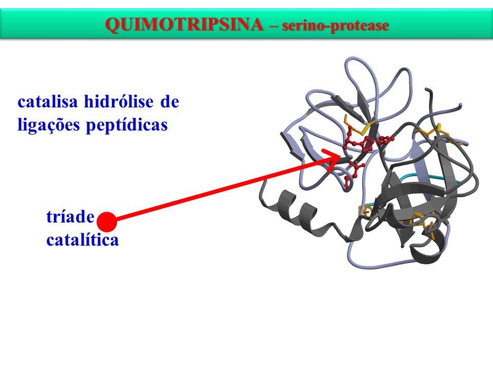 QUIMOTRIPSINA – serino-protease