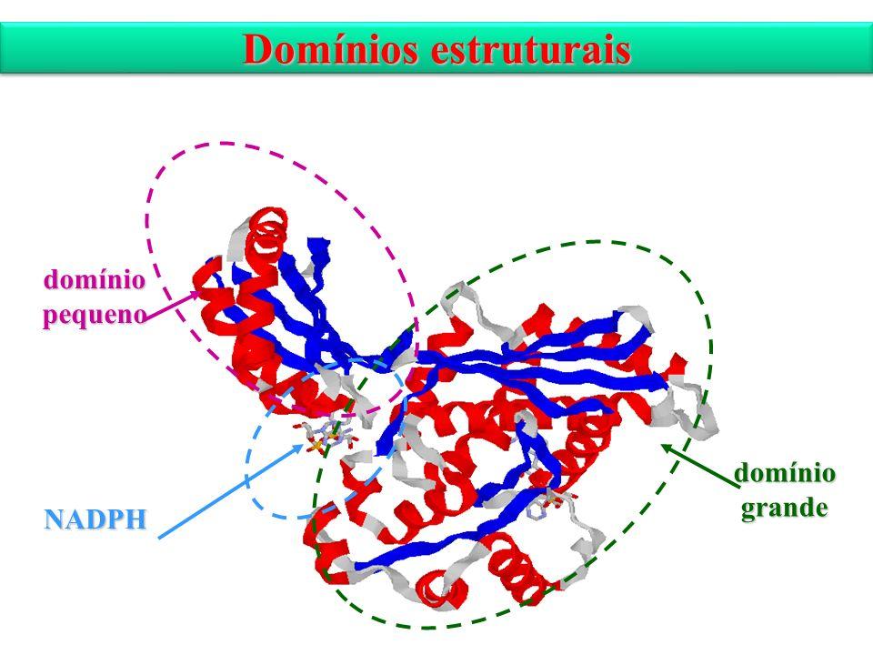 Domínios estruturais domínio pequeno domínio grande NADPH