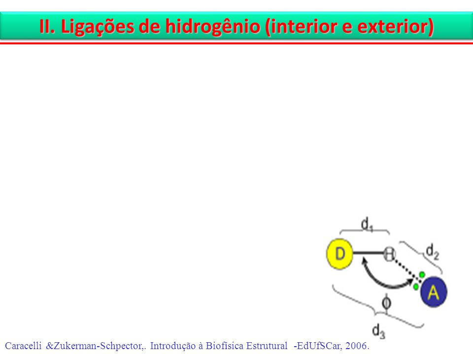II. Ligações de hidrogênio (interior e exterior)