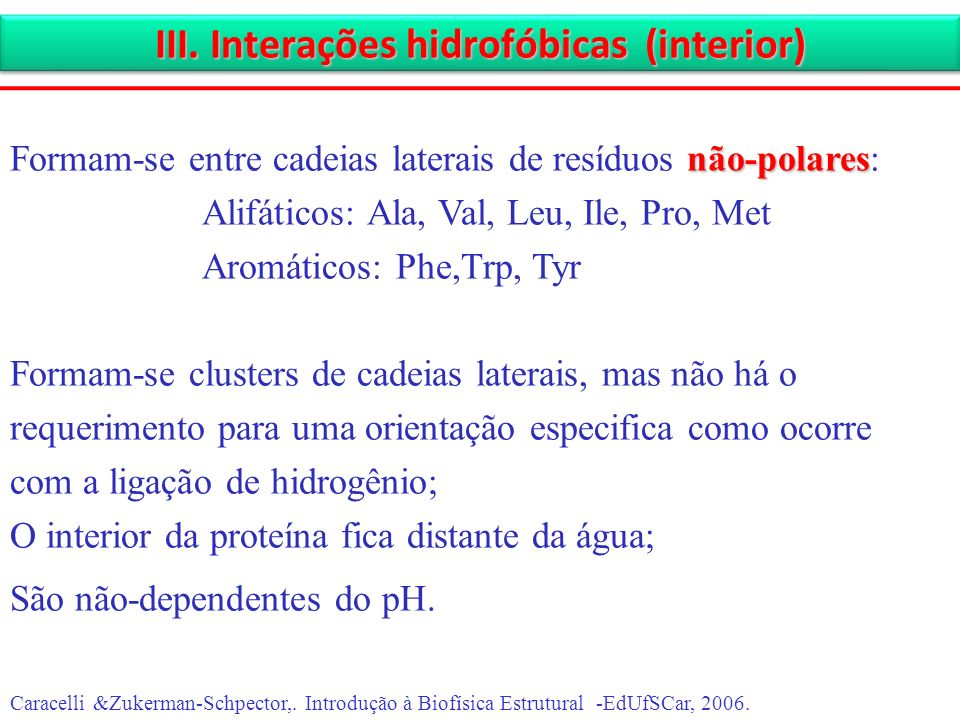 III. Interações hidrofóbicas (interior)