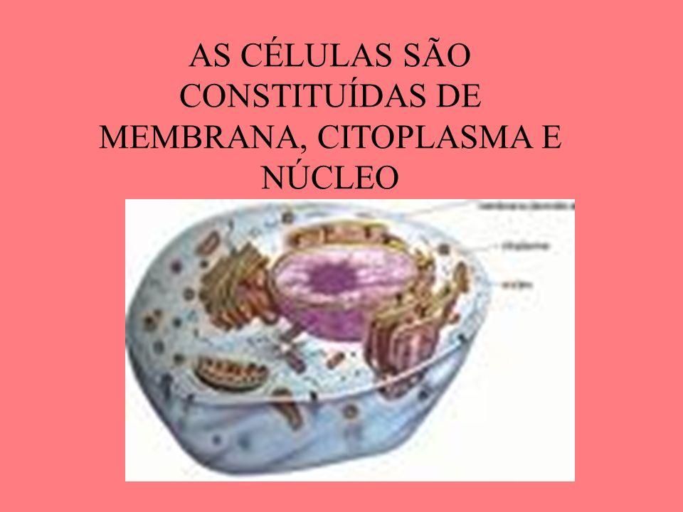 AS CÉLULAS SÃO CONSTITUÍDAS DE MEMBRANA, CITOPLASMA E NÚCLEO