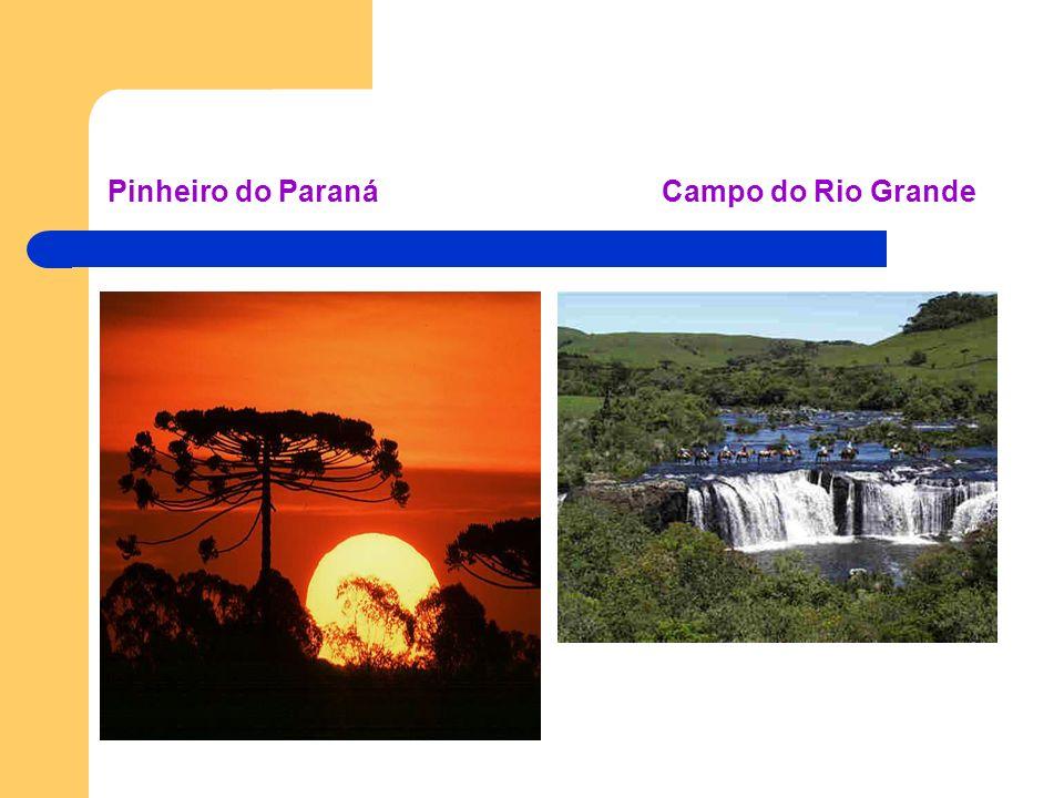 Pinheiro do Paraná Campo do Rio Grande