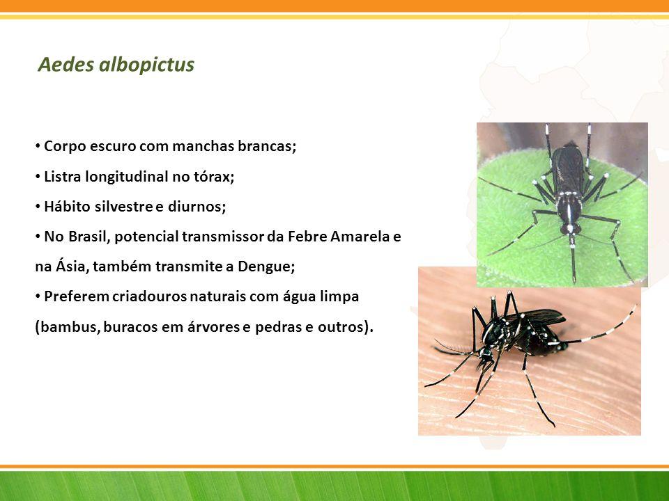 Aedes albopictus Corpo escuro com manchas brancas;