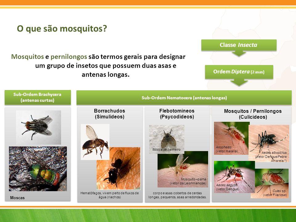 Flebotomíneos (Psycodídeos) Mosquitos / Pernilongos (Culicídeos)