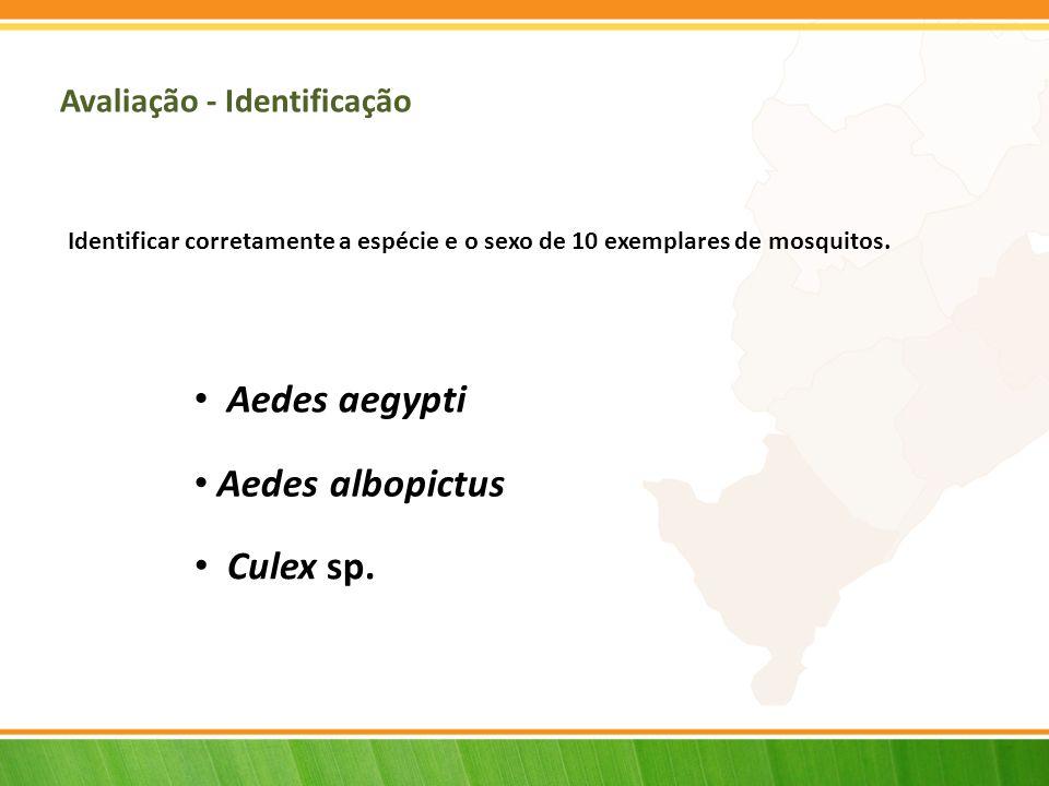Aedes aegypti Aedes albopictus Culex sp. Avaliação - Identificação