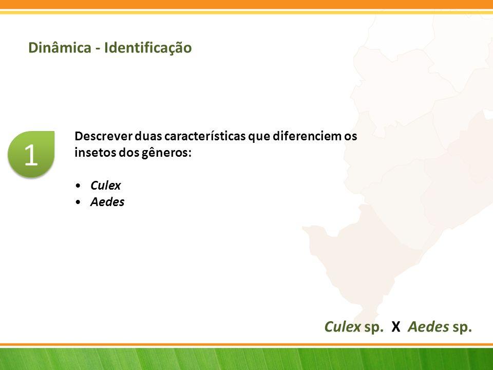 1 Dinâmica - Identificação Culex sp. X Aedes sp.