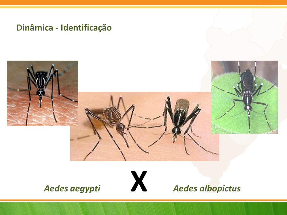 Aedes aegypti X Aedes albopictus