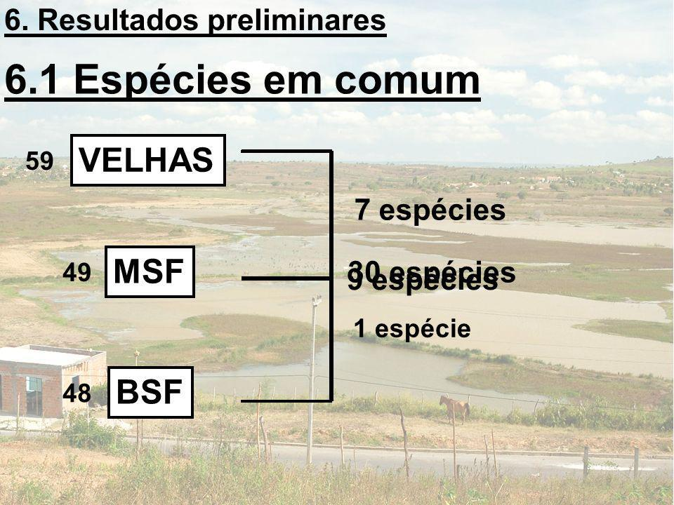 6.1 Espécies em comum VELHAS MSF BSF 6. Resultados preliminares