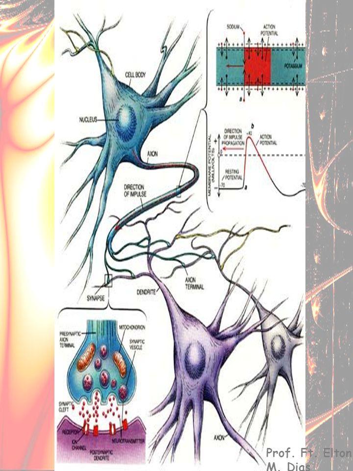 Neurofisiologia Prof. Ft. Elton M. Dias