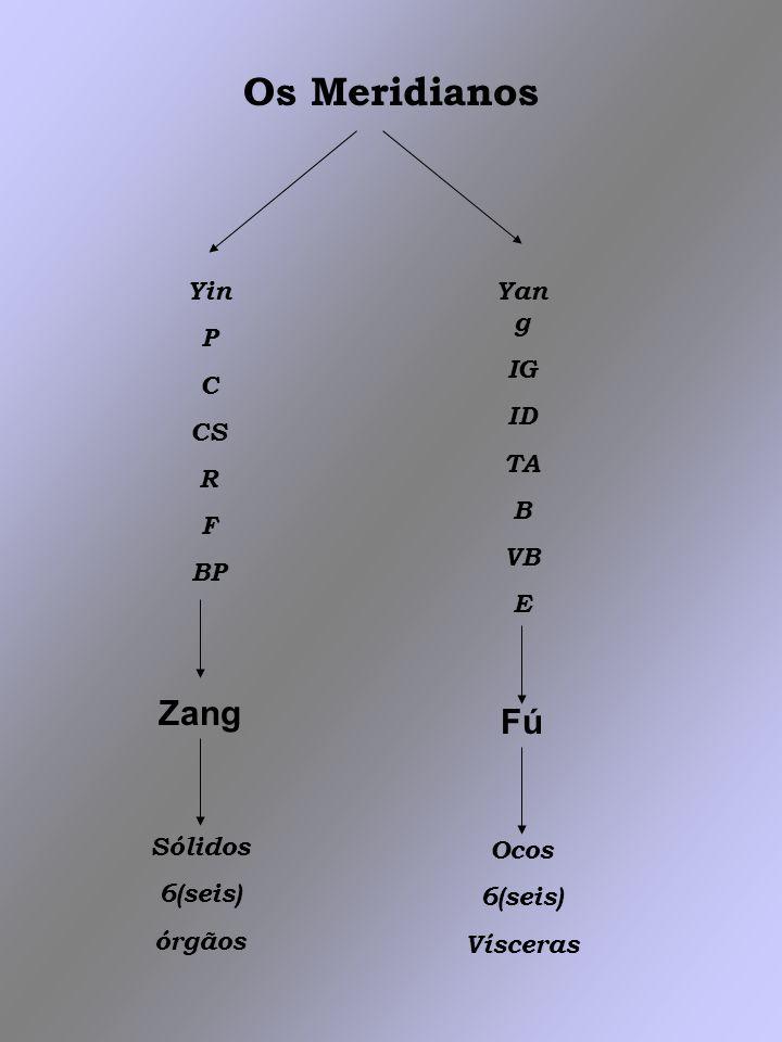 Os Meridianos Zang Fú Yin P C CS R F BP Yang IG ID TA B VB E Sólidos