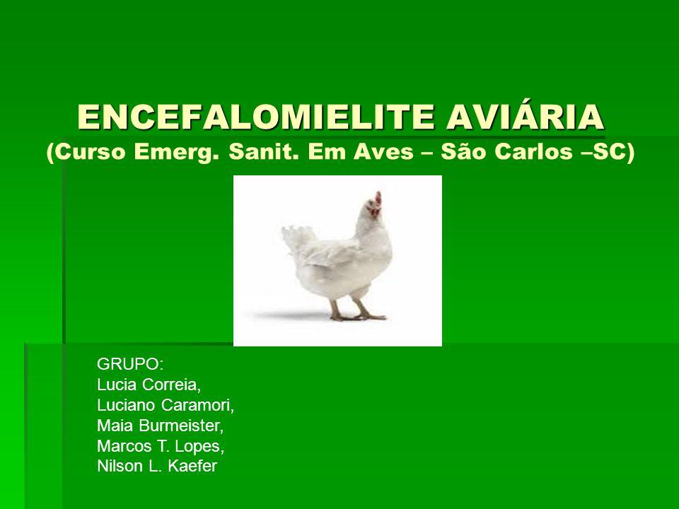 ENCEFALOMIELITE AVIÁRIA (Curso Emerg. Sanit. Em Aves – São Carlos –SC)