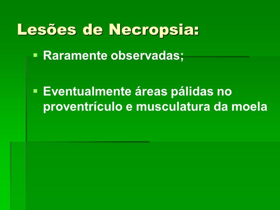 Lesões de Necropsia: Raramente observadas;