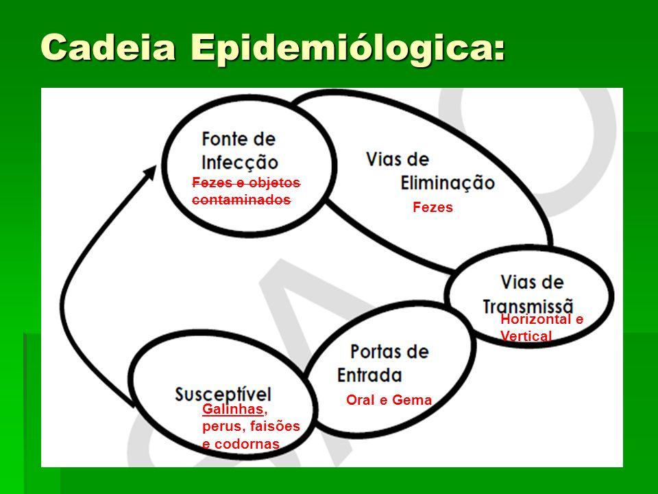 Cadeia Epidemiólogica: