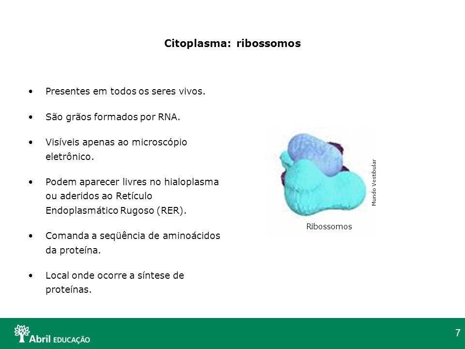 Citoplasma: ribossomos