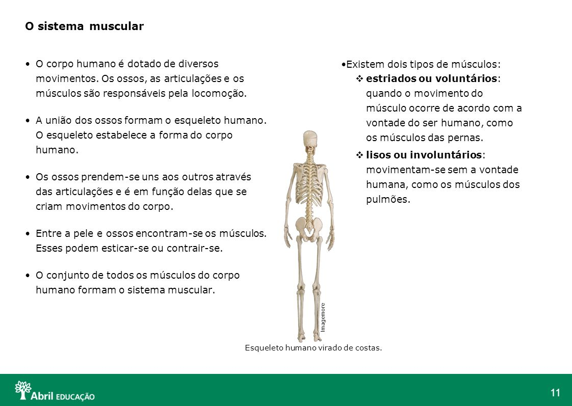 O sistema muscularO corpo humano é dotado de diversos movimentos. Os ossos, as articulações e os músculos são responsáveis pela locomoção.