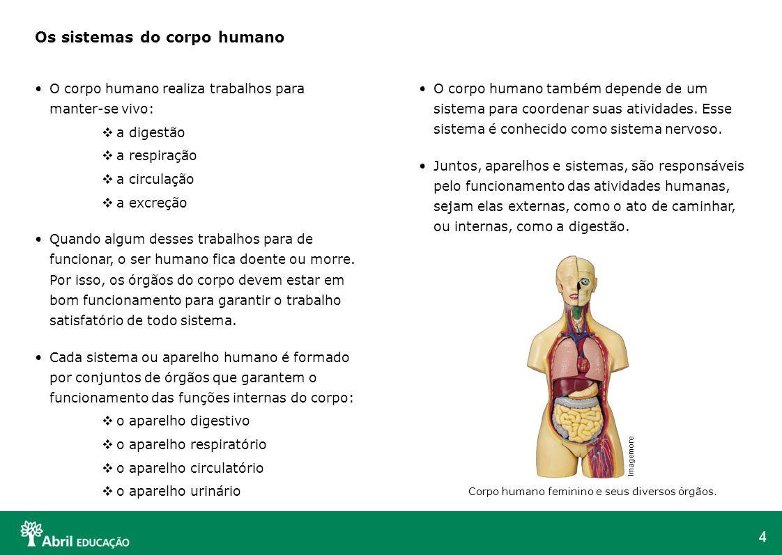 Aparelhos do corpo humano e suas funçoes
