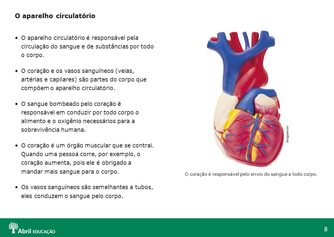 O aparelho circulatório