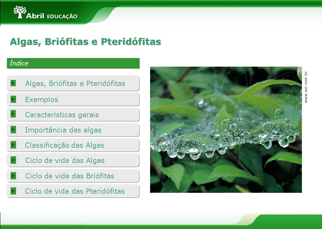 Algas, Briófitas e Pteridófitas
